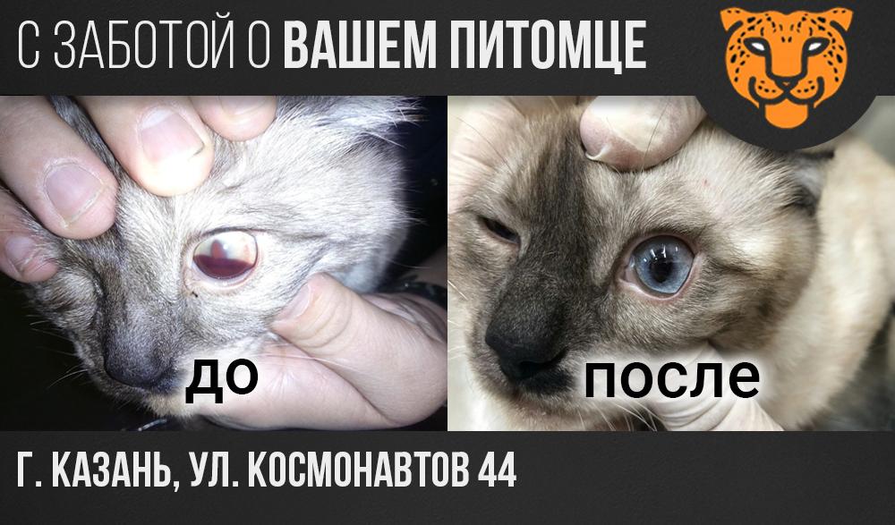 Глаза у кота. Почему важно следить за их состоянием?