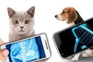 Где сделать рентген собаке или кошке