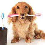 Стоматология для кошек и собак в Казани