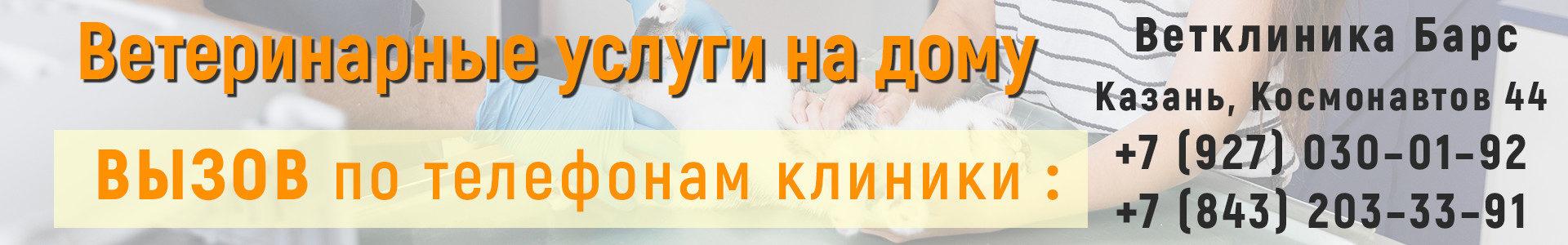 Вызов ветеринара на дом в Казани по тел.: +7 (927) 030-01-92, +7 (843) 203-33-91